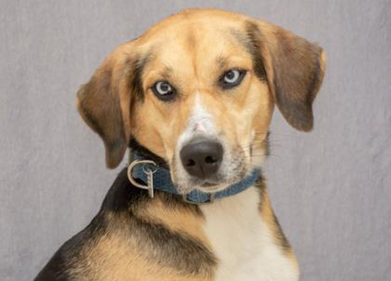 Tasha is available for adoption at the Animal Friends Humane Society. PROVIDED